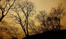 树 天空图片