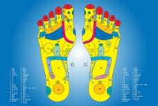 足部保健矢量图图片