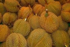 榴莲(水果之王)图片