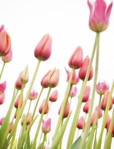 春天花朵图片