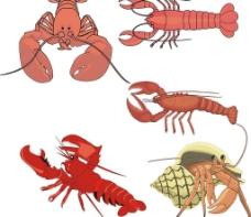 各种大虾图片