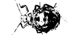 昆虫 矢量图片