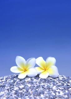 沙灘夏天花图片