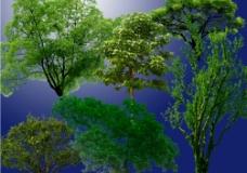 PS后期各种单棵植物分层(系列四)图片