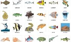 海底生物总动员图片