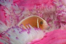 鱼和珊瑚礁图片