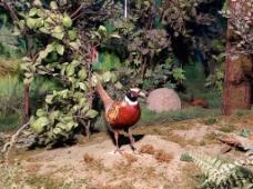 自然博物馆鸟类图片