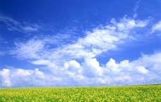 蓝天白云小黄花图片