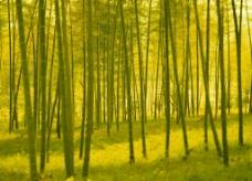 飘渺的竹林图片