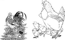 線描精品母雞和小雞圖片