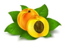 橙子苹果黄桃矢量素材图片